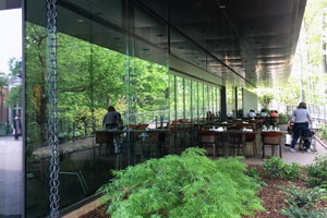 Atlanta Botanical Gardens Café Renovation